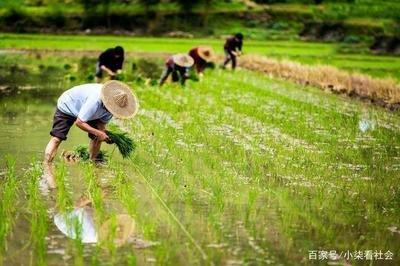 全面压实耕地保护责任 牢牢把住粮食安